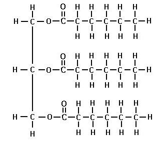 fedtmolekyle